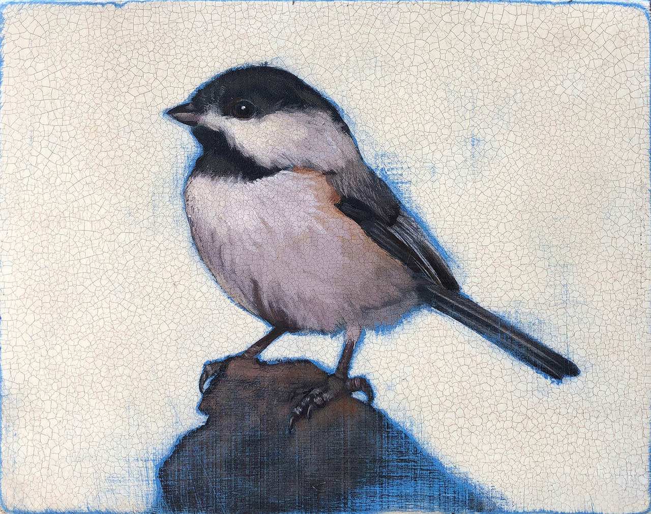 Young Chickadee, by Michael Wiens
